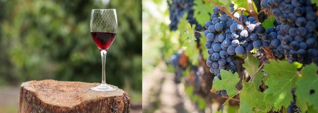 無添加ワインのイメージ